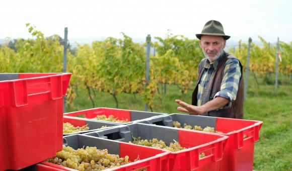 Vin de Liège Cooperative